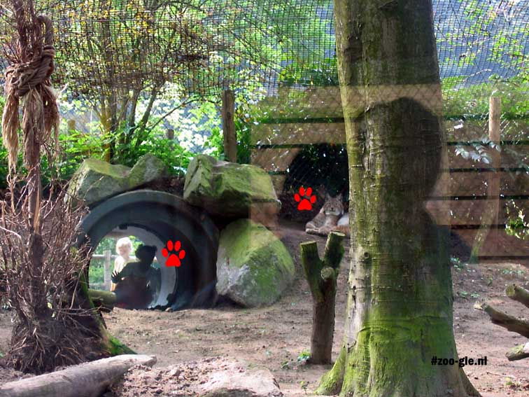 2005 Lynx enclosure