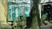 2005 Vulteres and jackals in the Ancient City