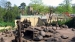 2005 Hamadryas baboon in the Ancient City