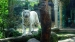 2005 Ancient City: white tiger