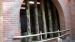 2005 Fencing against peeing rhinoceros