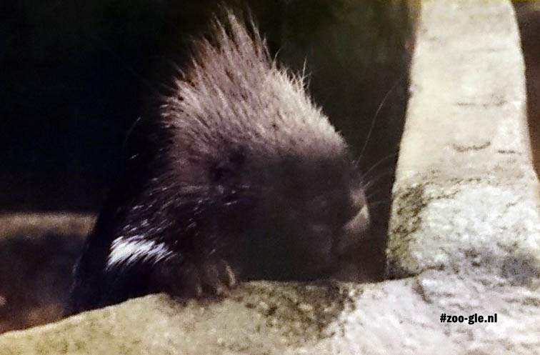 1996 Porcupine