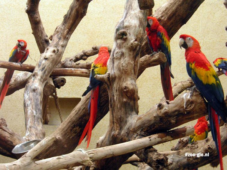 2005 Urucu: macaws