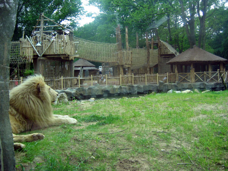 2005 Playground African safari