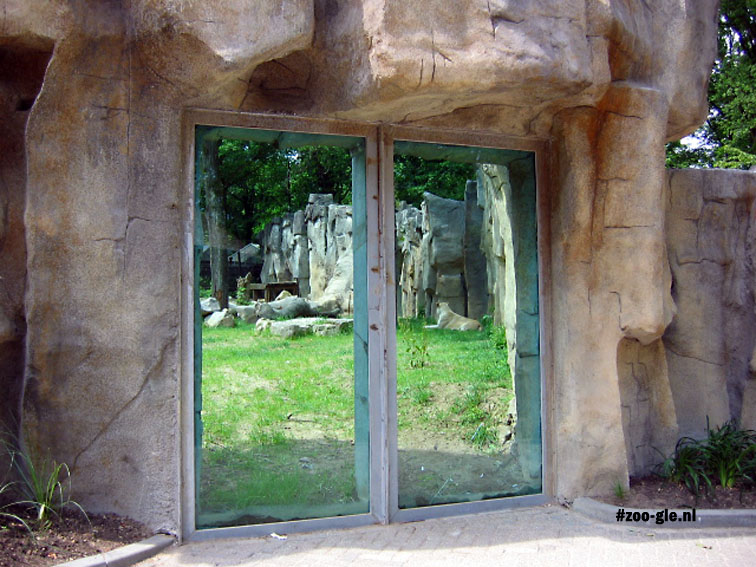 2005 Lioness behind glass