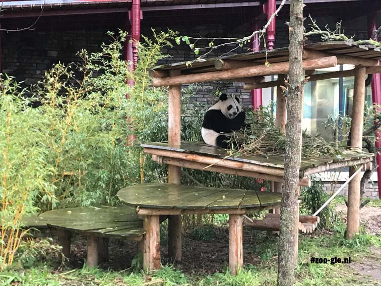 2017 Mr and Mrs Panda having each their own indoor and outdoor enclosure