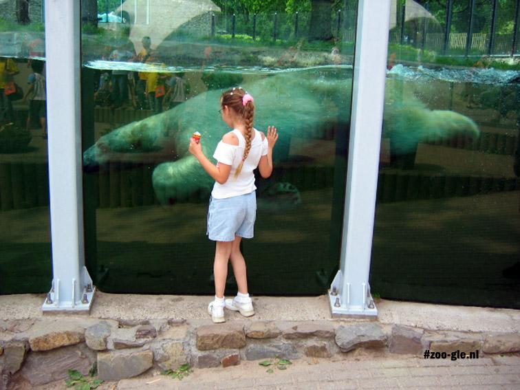 2005 Polar bear
