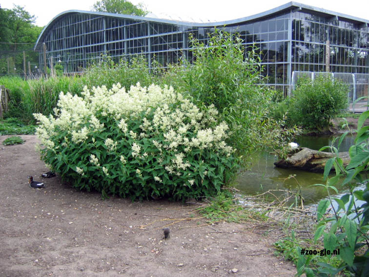 2005 Waterland, Vlinderloktuin, Ravotaapia