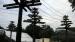 2005 Quasi bomen met lianen, een systeem van palen en touwen