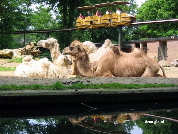 2005 Monkeytrail boven de kamelen