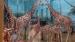 2008 Giraffen voor geschilderde natuur op muren
