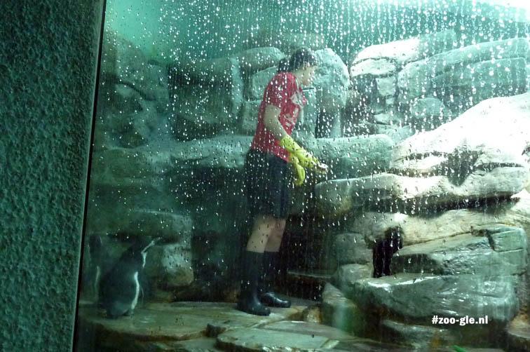 2012 Verzorgster bij pinguïns