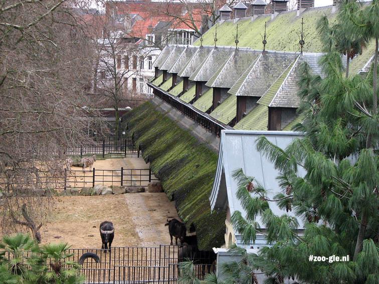 2008 Buffelgebouw 1937