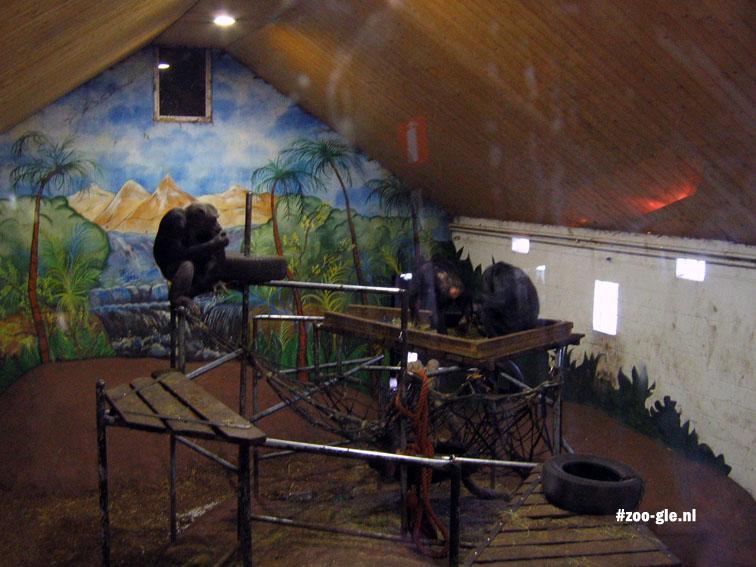 2007 Binnenverblijf chimpansees