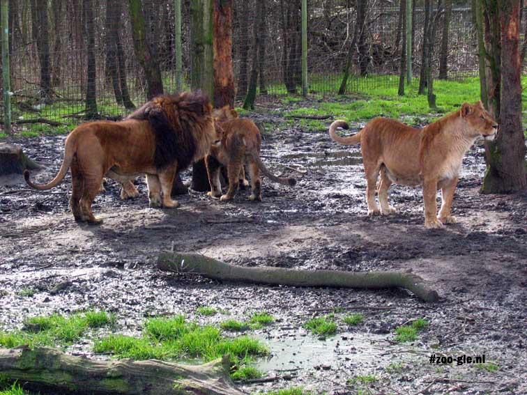 2007 Lions