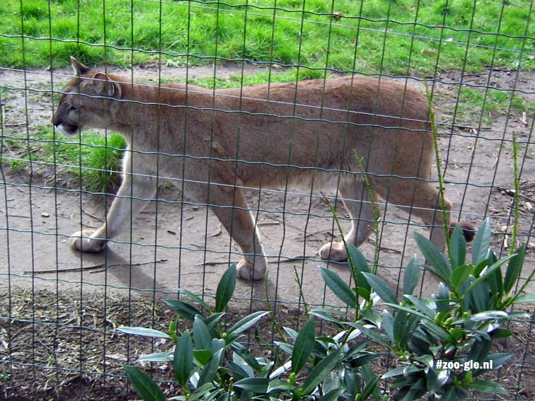 2007 Cougar