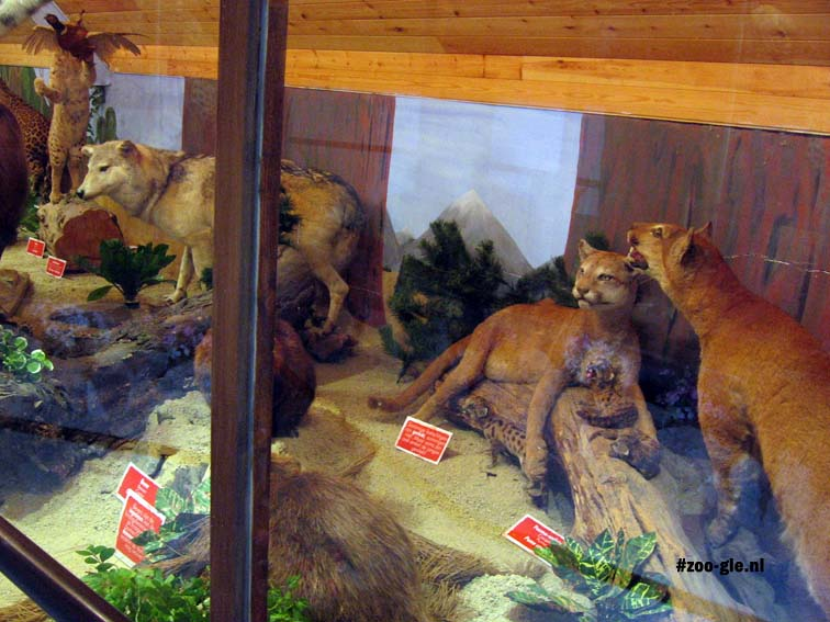 2007 Taxidermied animals