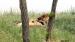 2016 Leeuwen in Serenga