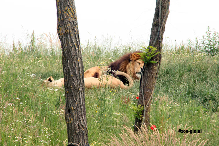 2016 Lions Serenga