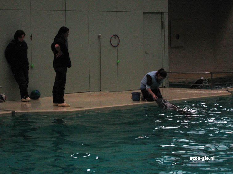 2007 Dolphinarium