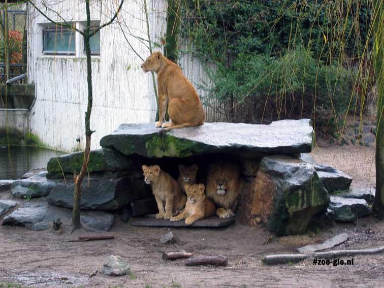 2007 Lion family