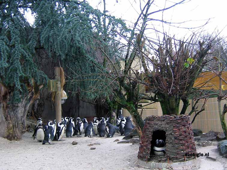 2007 Pinguïns