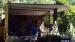 2013 Boomkangoeroes in oud chimpanseeverblijf