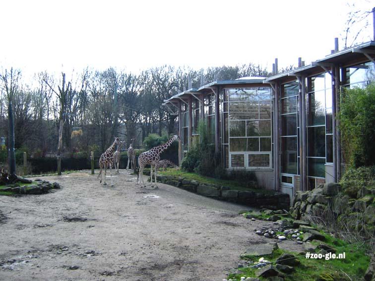 2006 Giraffenperk van 2000