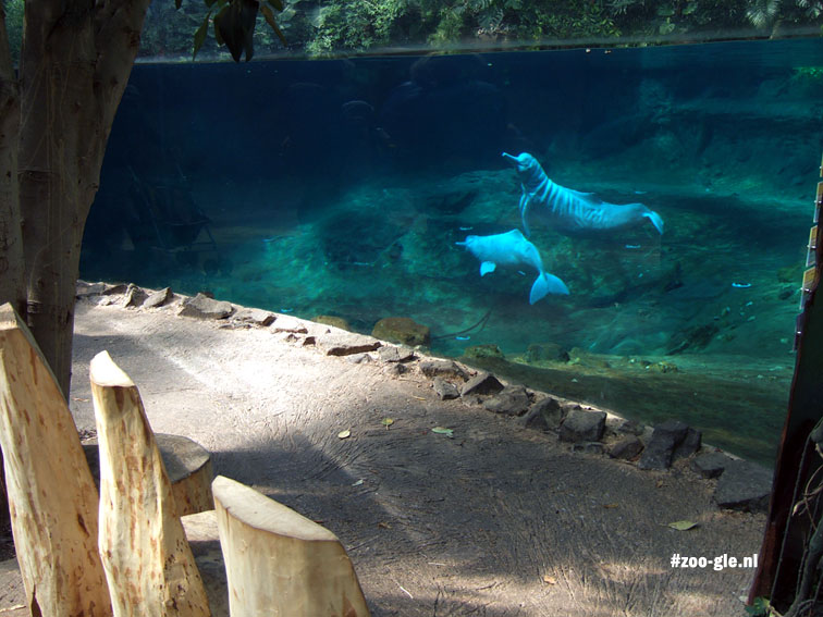 2006 Orinocodolfijnen Amazonegebied Rio Negro