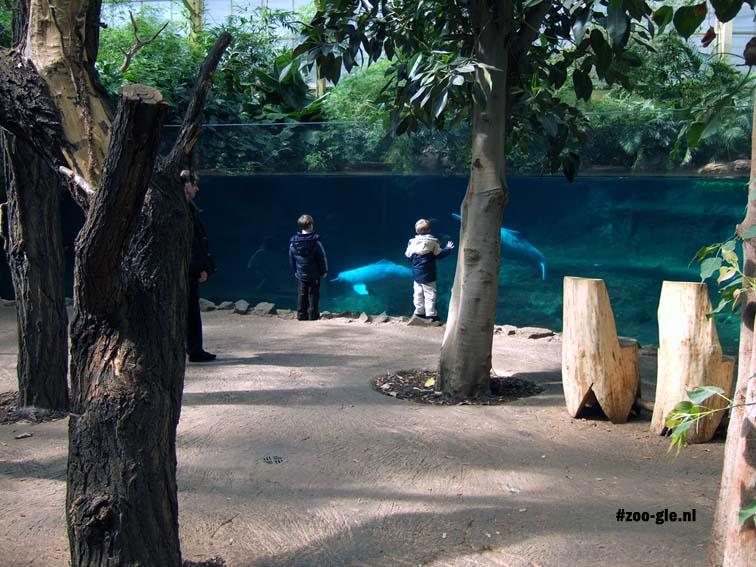2006 Twee rivierdolfijnen