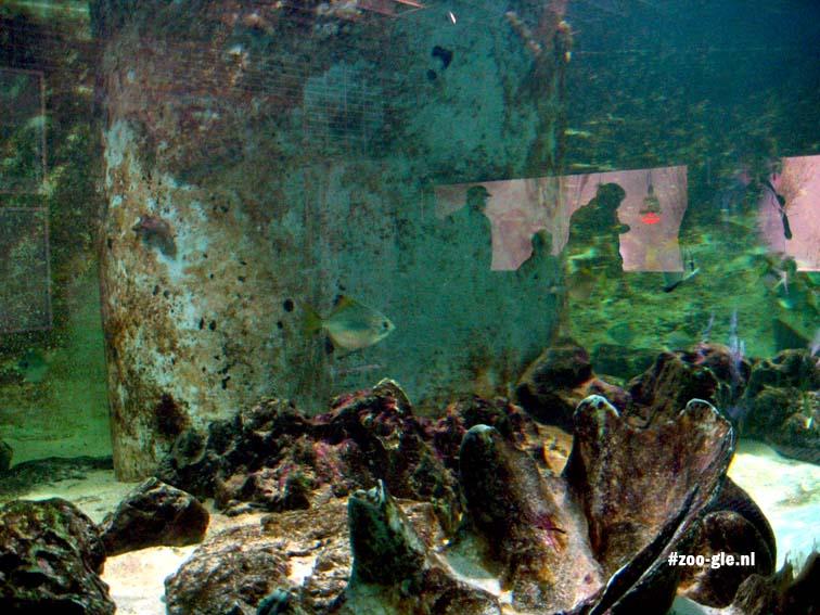 2006 Haus der 1000 Fische 1951