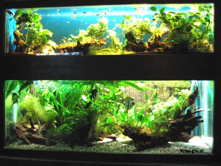 2006 Aquarium