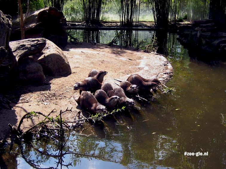 2006 Enclosure short-clawed otters
