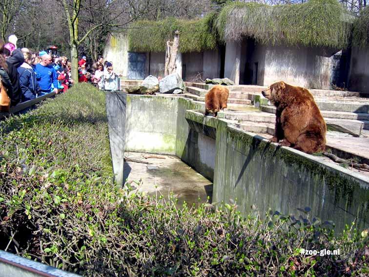 2006 Bij de Kodiakberen
