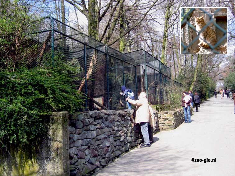 2006 Verblijf wilde katten en Wildcat himself