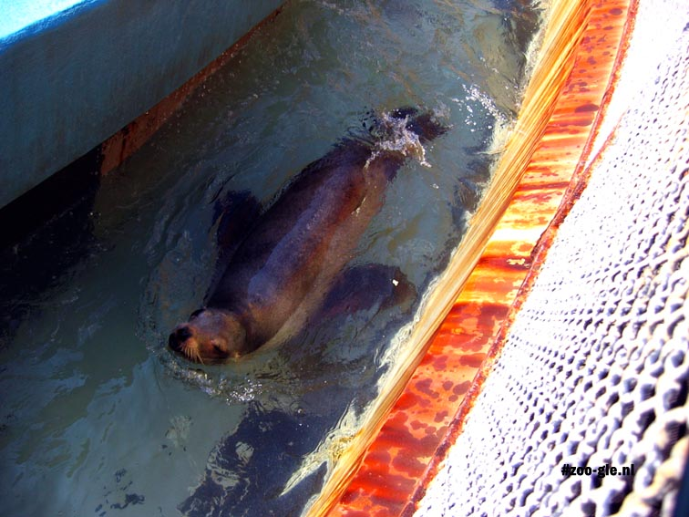 2006 Aerial photography: sea lion