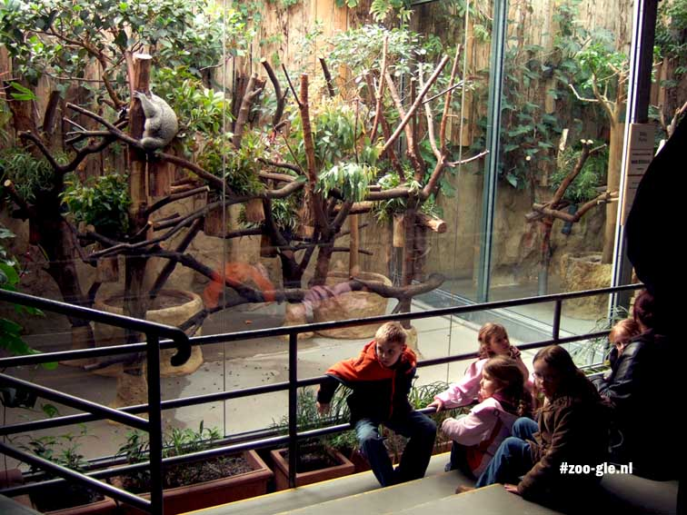 2006 Australië: koalahuis