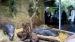 2006 Dwergnijlpaarden in de etalage