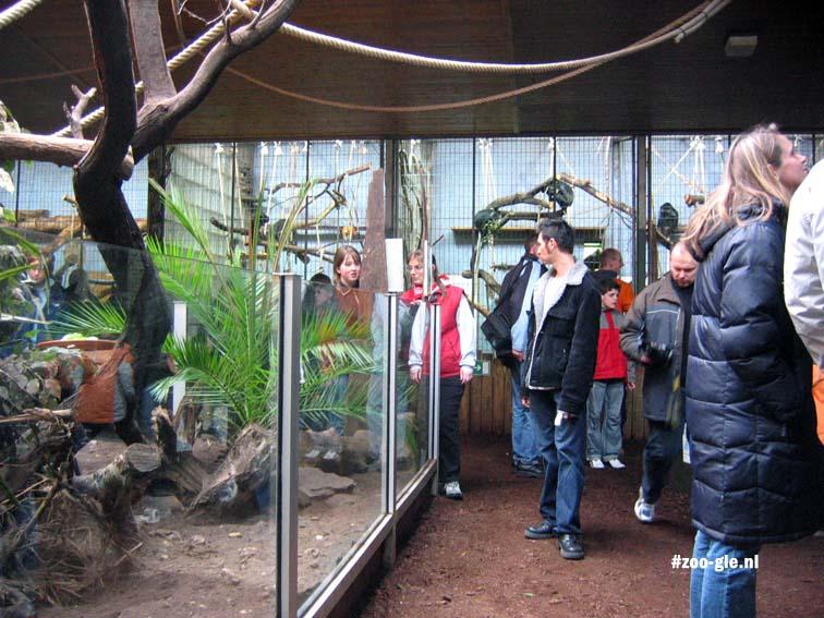 2006 Apen in het Equatorium