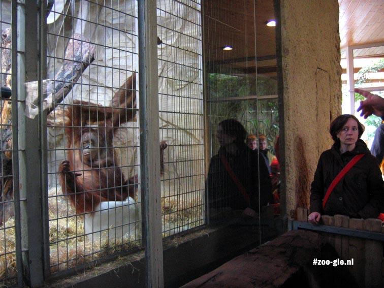 2006 Gorilla