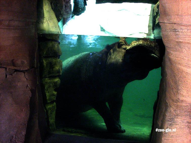 2007 Hippo