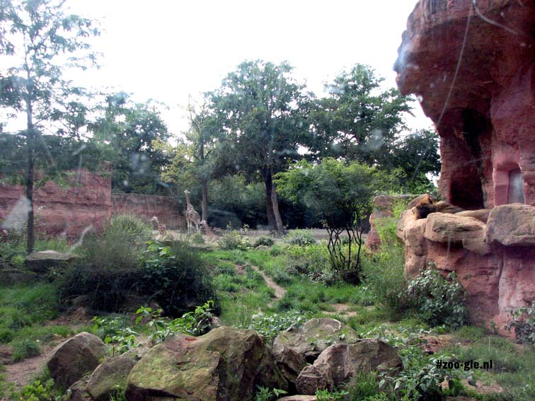 2007 Landscape immersion, visitors feel as if they themselves are in the giraffe's habitat.