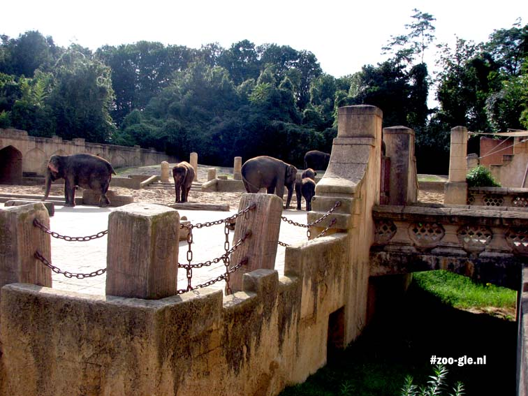2007 Jungle Palace, elephants