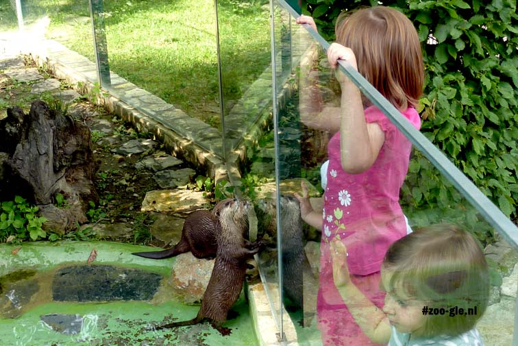 2010 Glass panel separating Asian otters from visitors