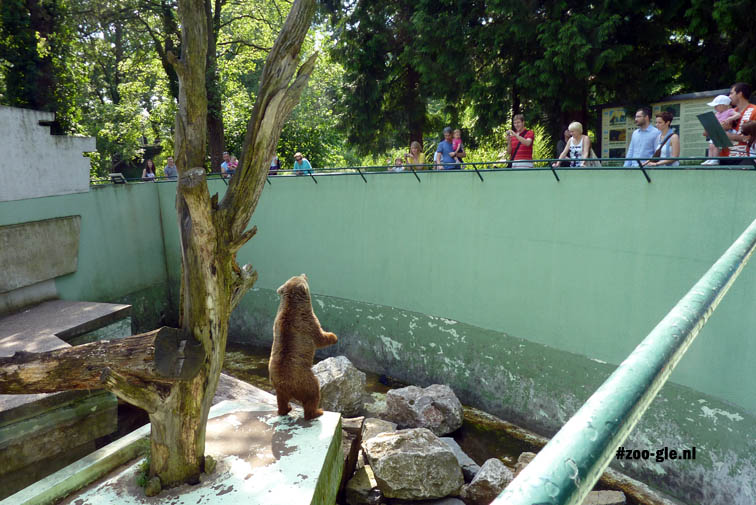 2010 Concrete bear enclosure