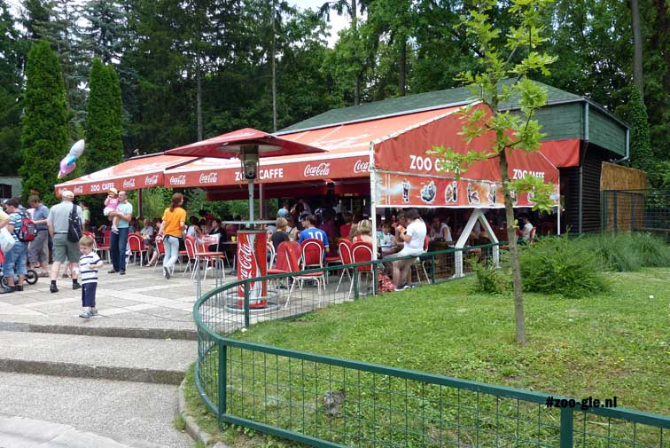 2010 Café voor een a cup-a-zoo
