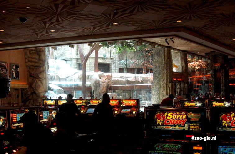 2006 MGM Lion Habitat