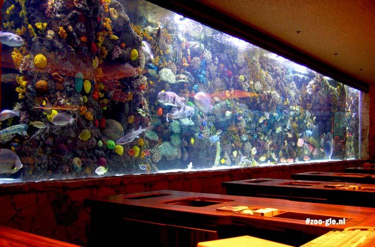 2006 Aquarium Vegas