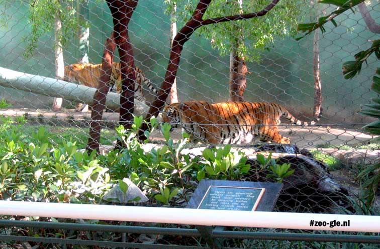 2006 S & R's Secret Garden, tigers