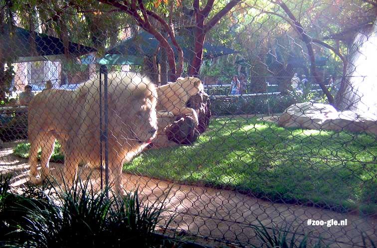 2006 S & R's Secret Garden, leeuwen